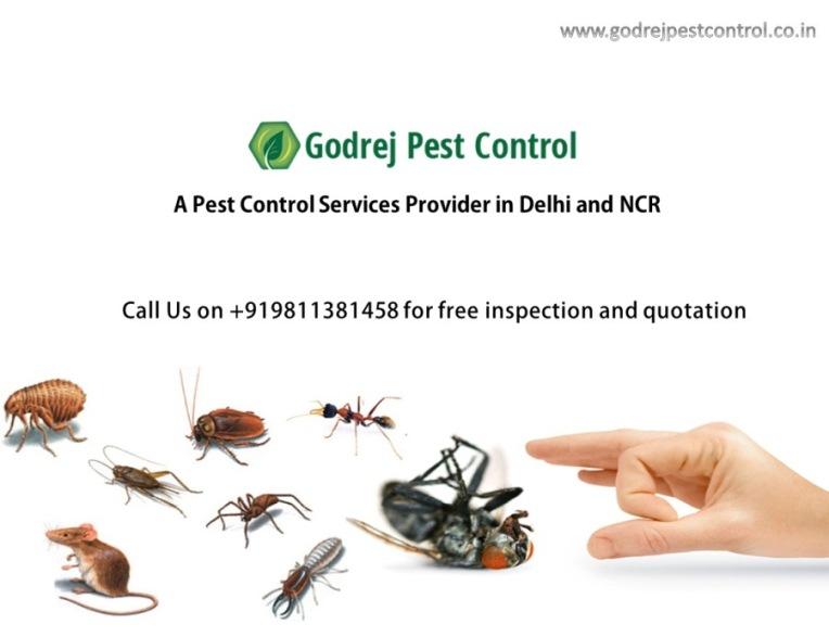 godrej-pest-control-faridabad-9811381458