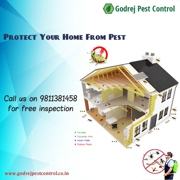 pest-control-and-termite-treatment-9811381458