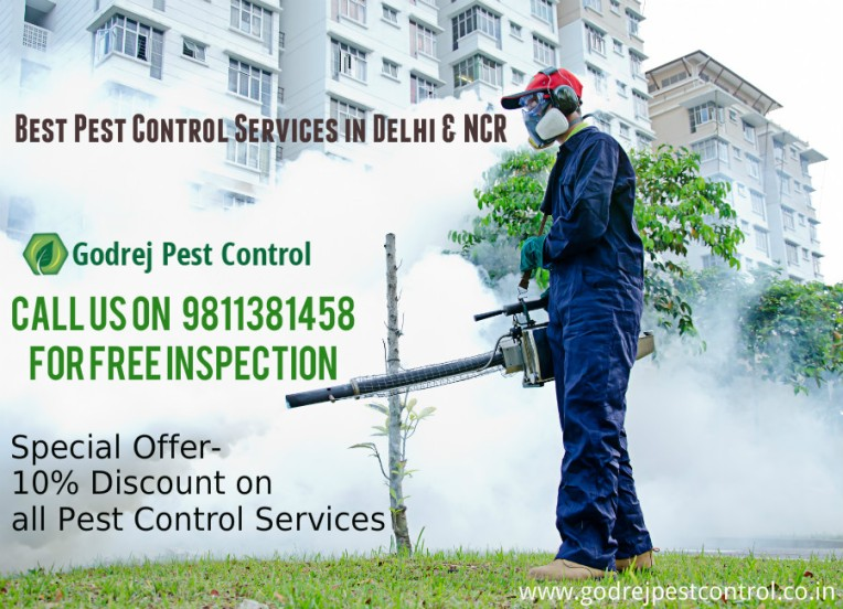 pest-control-and-termite-treatment-noida-9811381458
