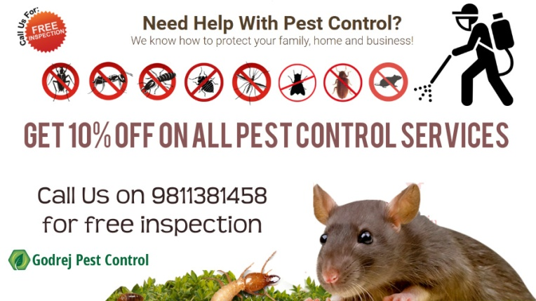 pest-control-and-termite-treatment-in-noida-and-delhi-9811381458