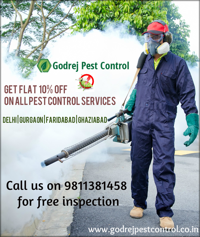 pest-control-and-termite-treatment-services-in-noida-delhi-greater-noida-gurgaon-faridabad-and-ghaziabad-9811381458