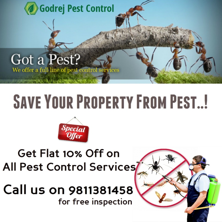 pest-control-in-noida-delhi-gurgaon-ghaziabad-and-faridabad-9811381458