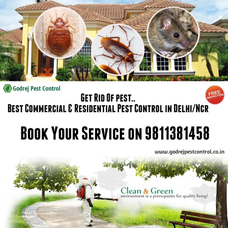pest control noida, delhi, faridabad, gurgaon and ghaziabad-9811381458