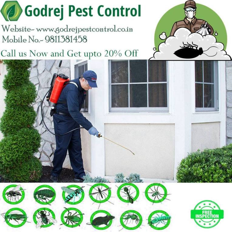pest control in south Delhi