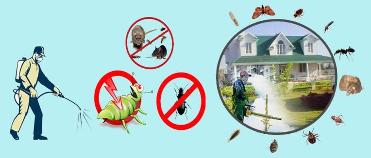 pest control dwarka