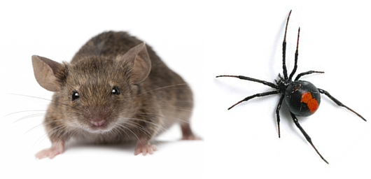 general-pest-control